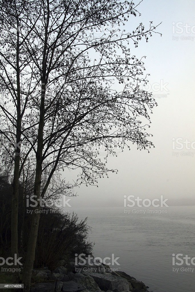 Trees in the Mist stock photo