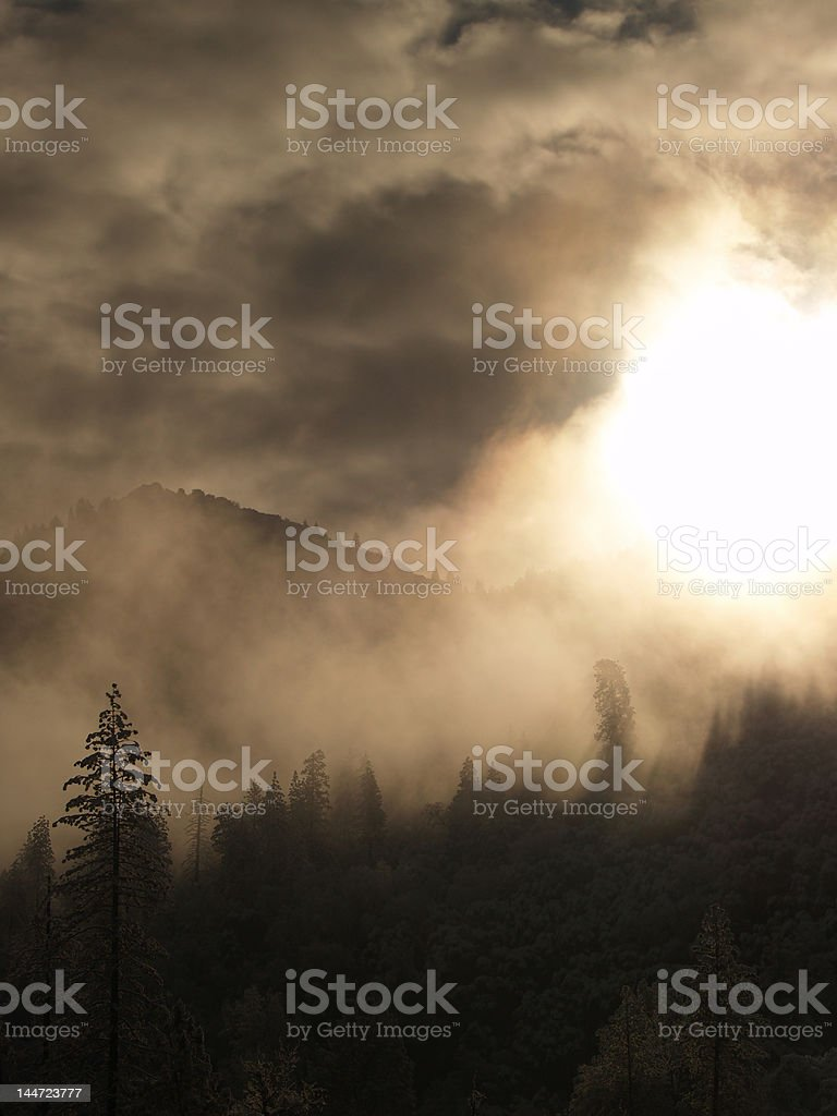 trees in the mountains royalty-free stock photo