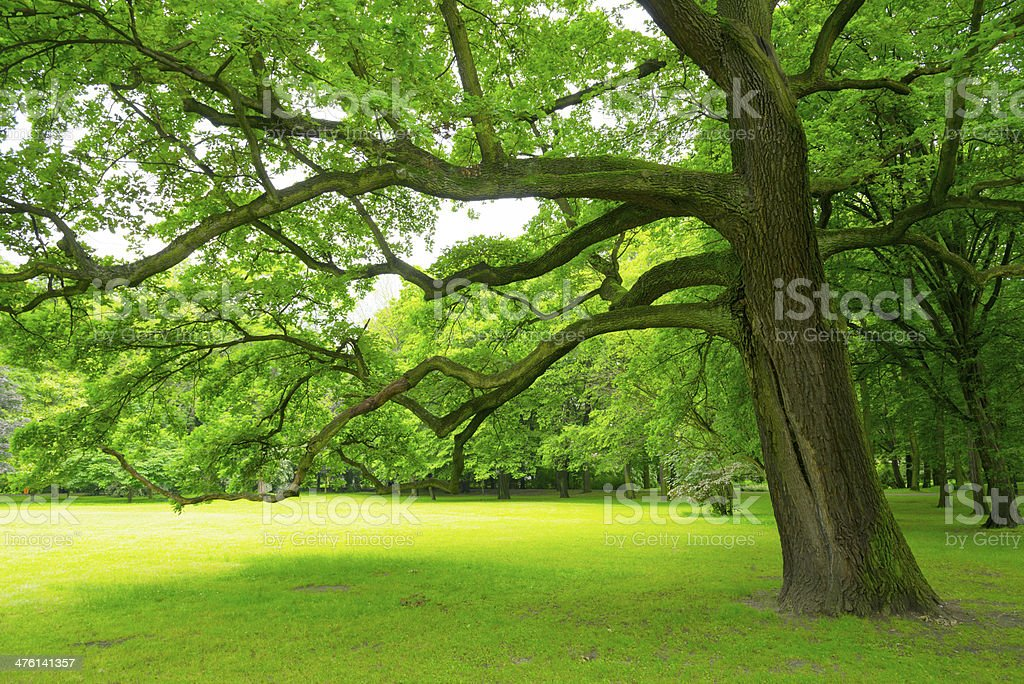 Trees in the Park - 36 Mpx royalty-free stock photo