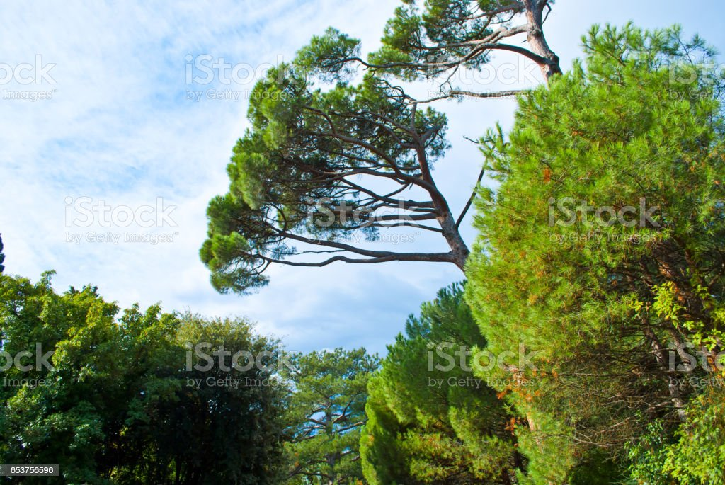 Trees in the park. stock photo
