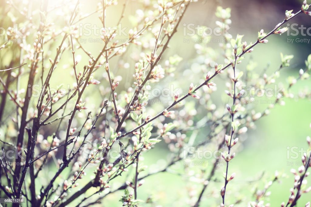 Trees in the park,Spring background stock photo
