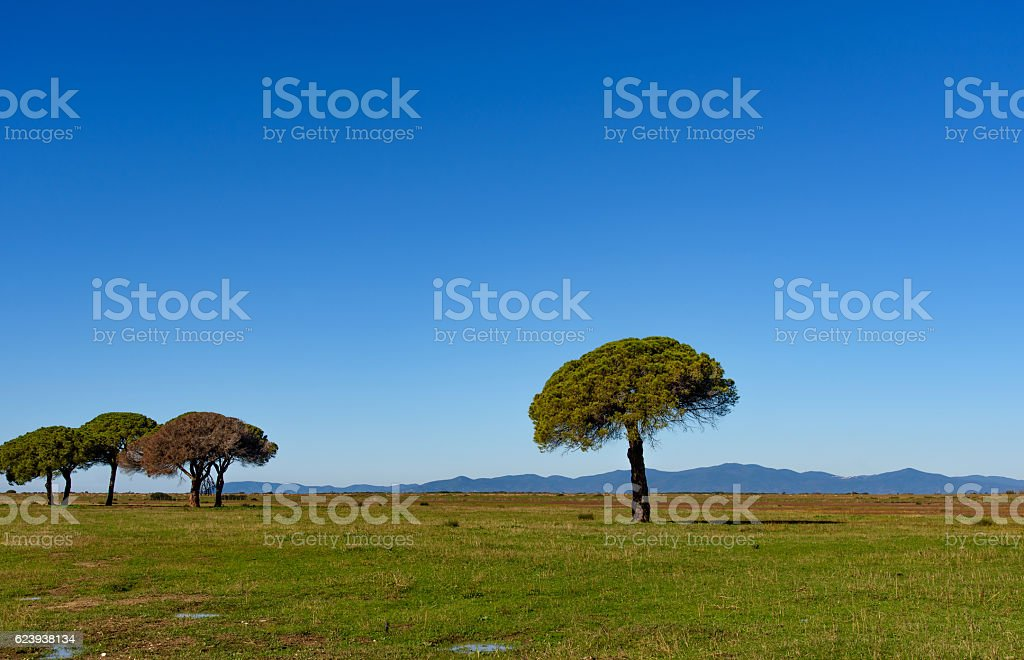 trees in the plain stock photo