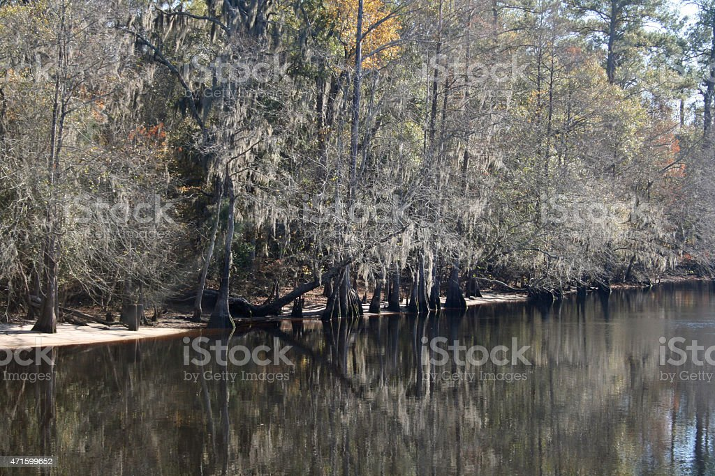 Trees in the river stock photo