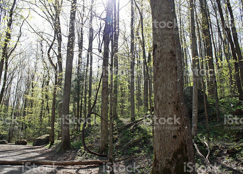 Trees in the Smoky Mountains royalty-free stock photo