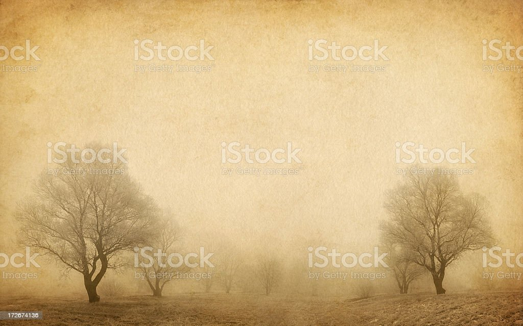 trees in the winter fog stock photo