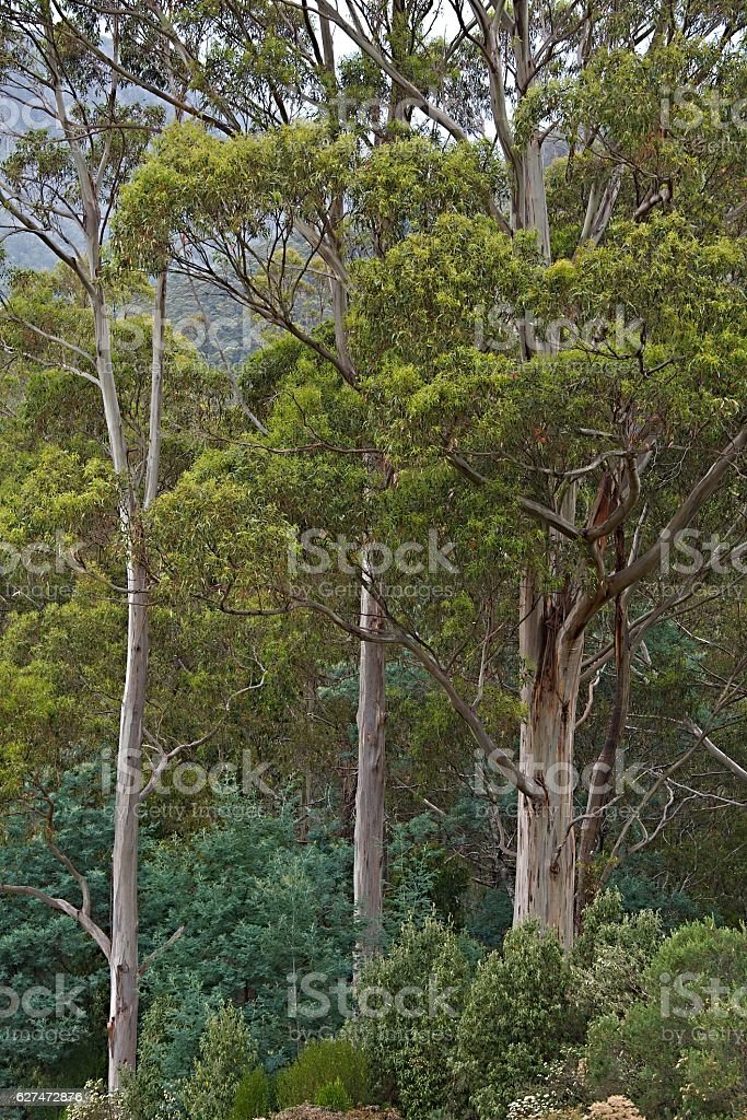 Trees in the woods stock photo