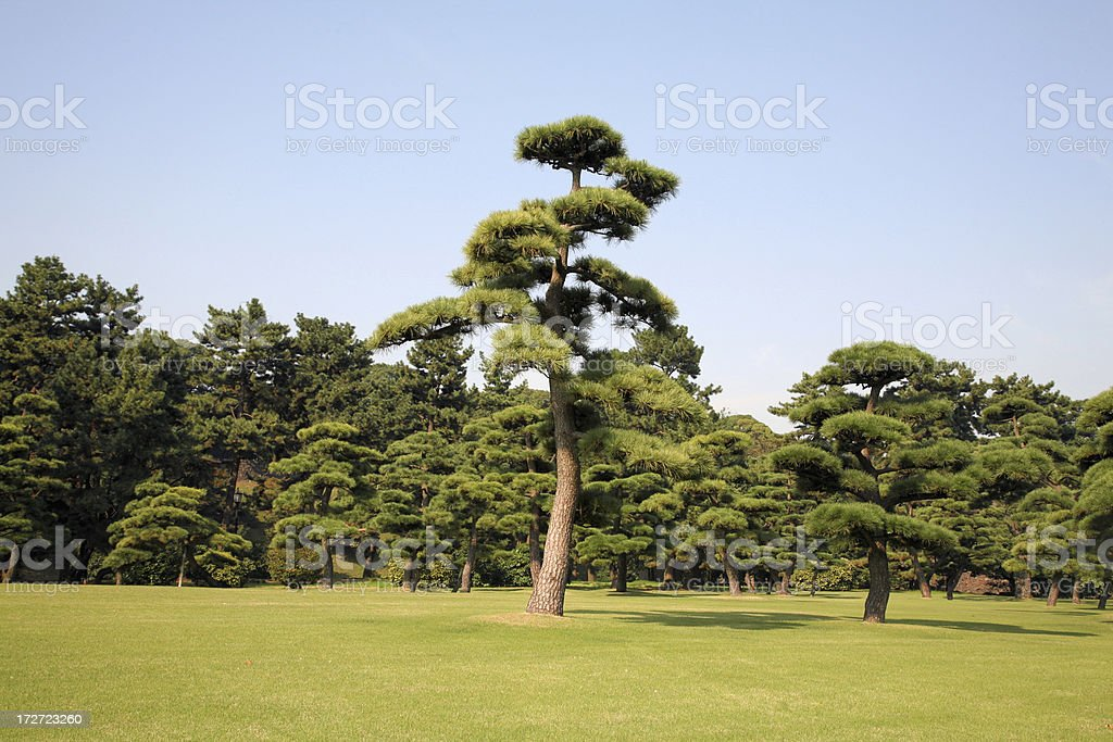 Trees in Tokyo, Japan royalty-free stock photo