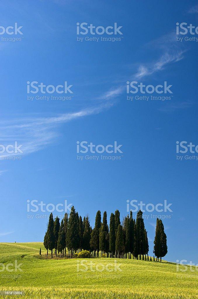 Trees in Tuscany royalty-free stock photo