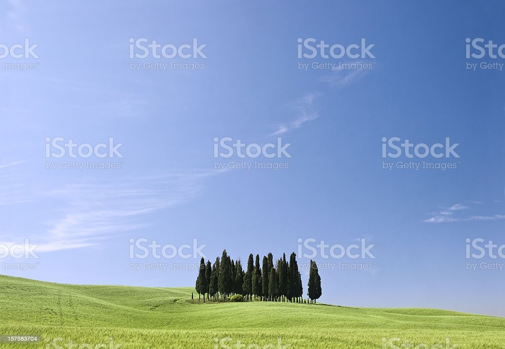 Trees in Tuscany royalty-free stock photo