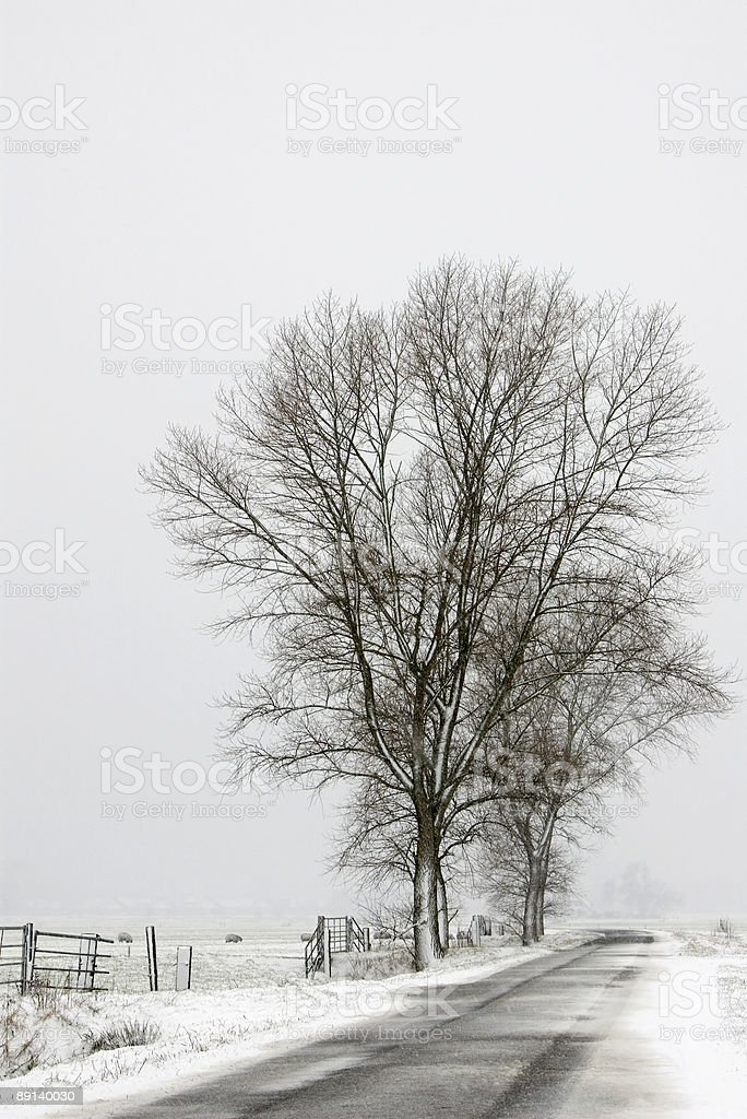 Trees in Winter Polder (the Netherlands) royalty-free stock photo