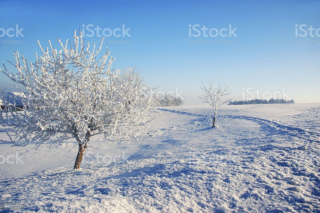 Trees in Winterlandscape royalty-free stock photo