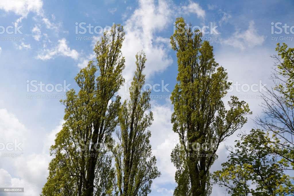 Trees infront of amazing clouds! stock photo