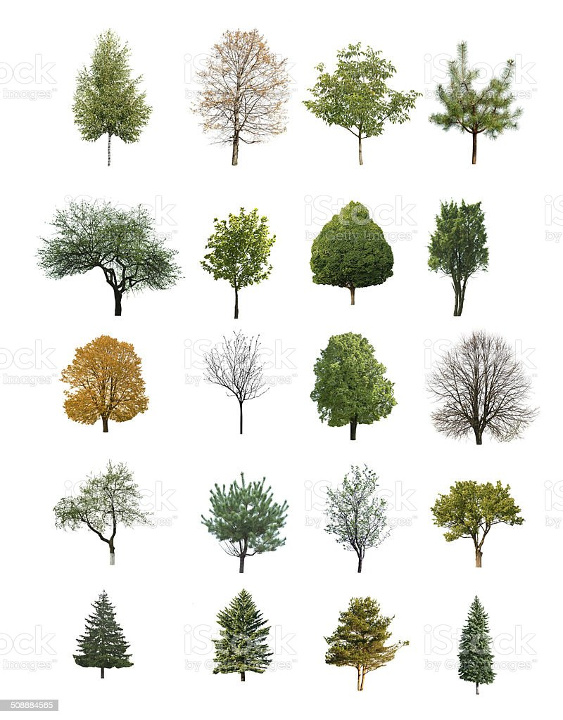 trees isolated stock photo