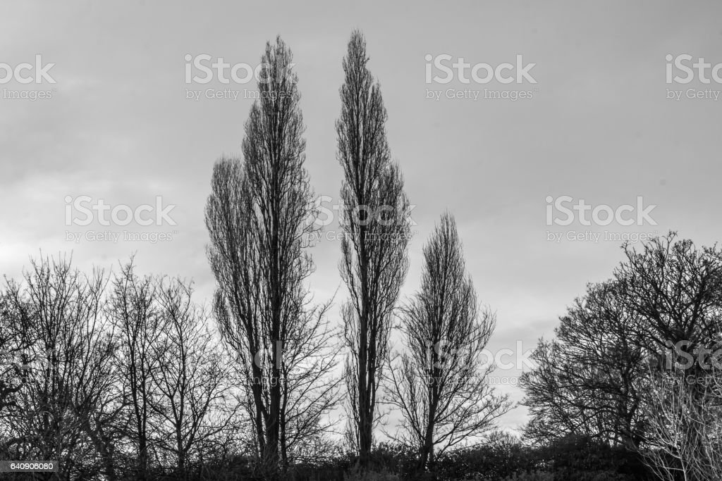Trees Landscape Silhouettes stock photo