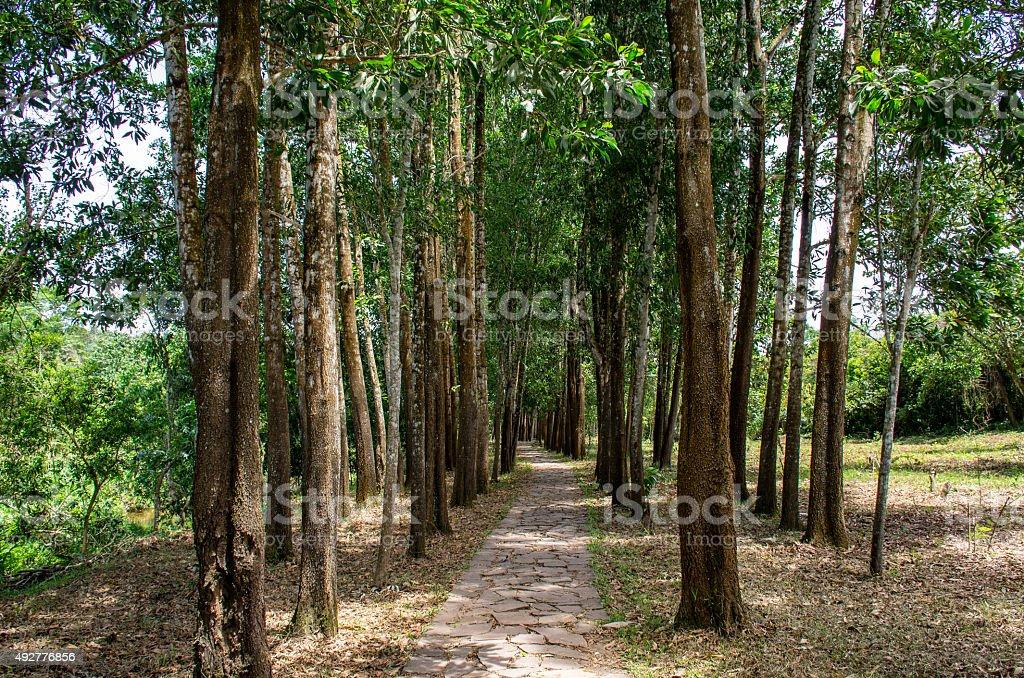 trees line stock photo
