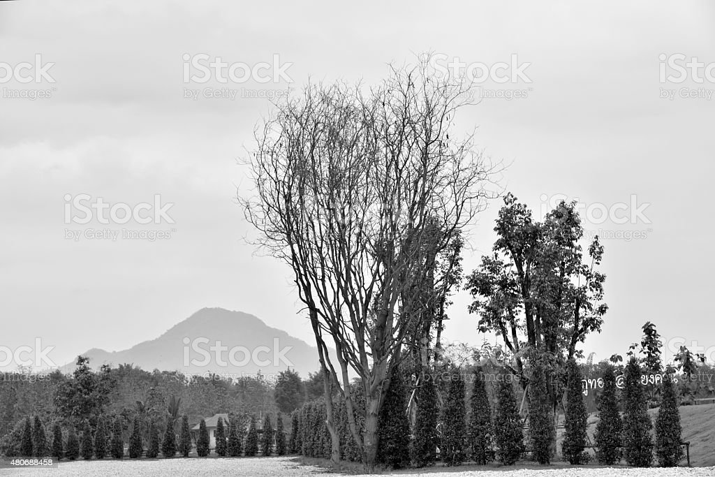 Trees lined stock photo