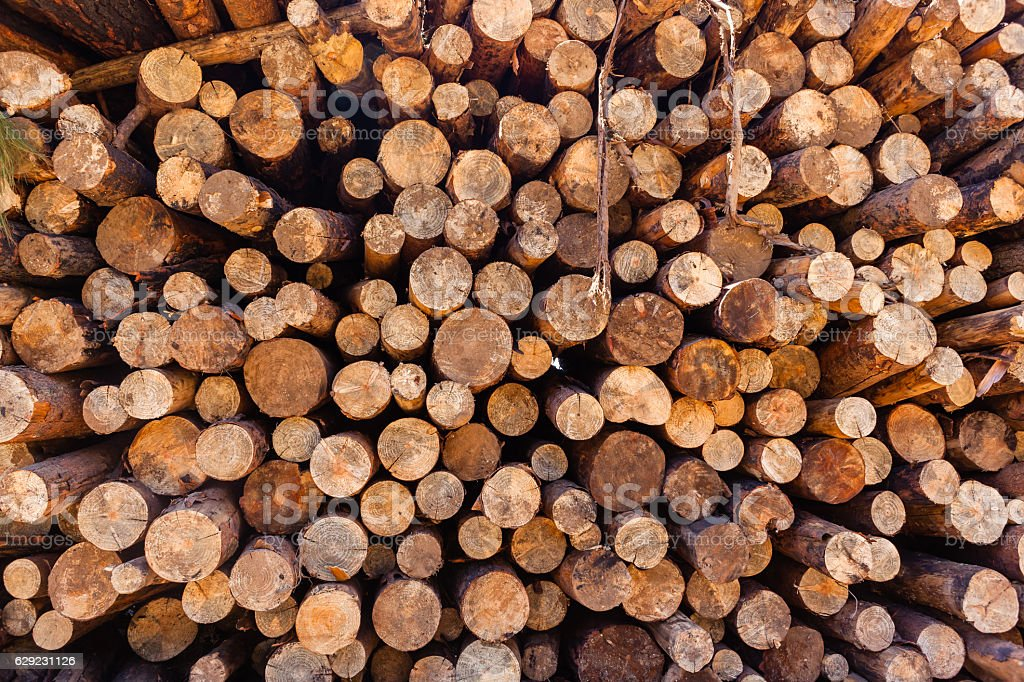 Trees Logs Stack stock photo