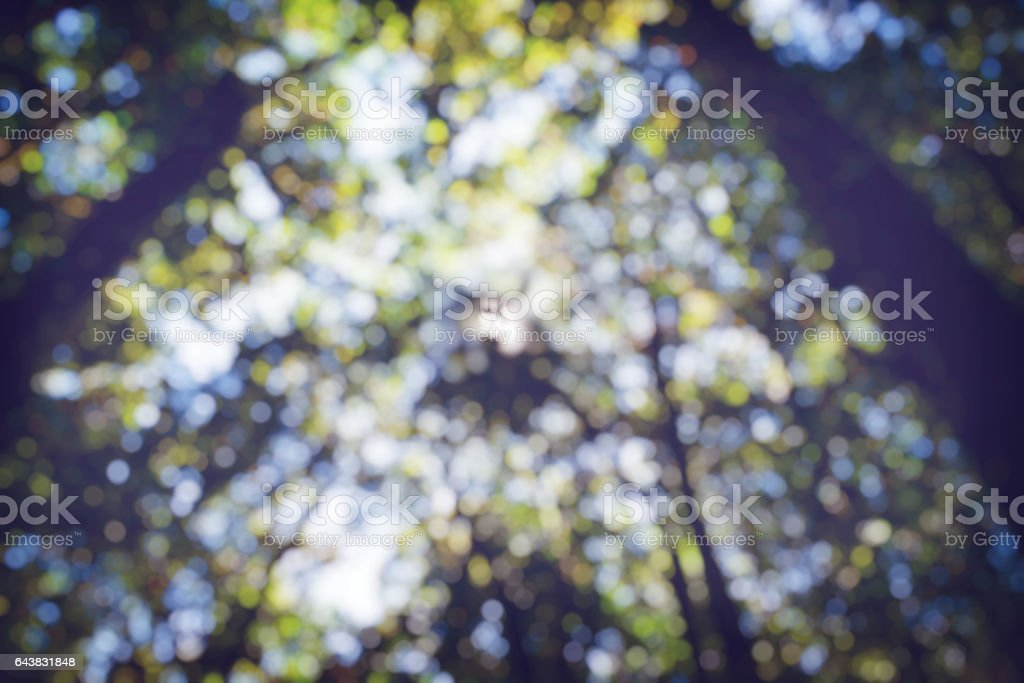 Trees naturally blurred background bokeh. stock photo