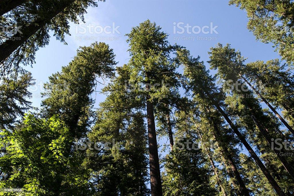 Trees Near Cougar Lake stock photo