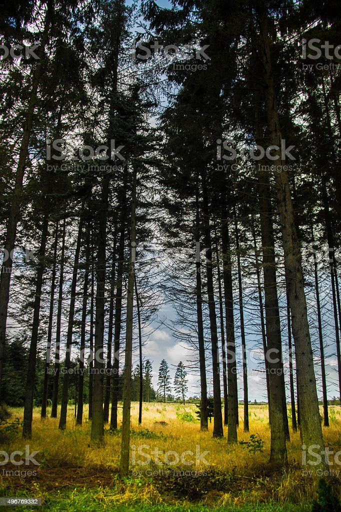 Trees of Denmark stock photo