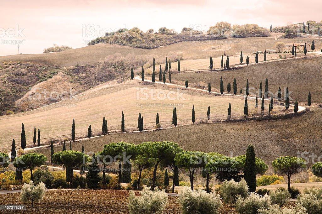 Trees of La Foce Tuscany royalty-free stock photo