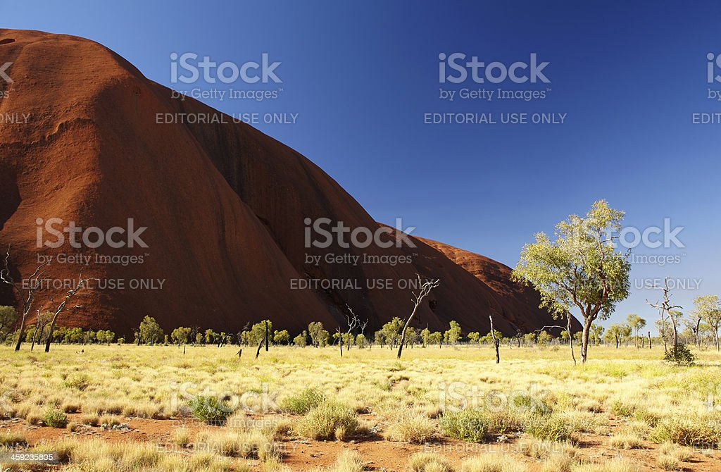 Trees Of Uluru stock photo