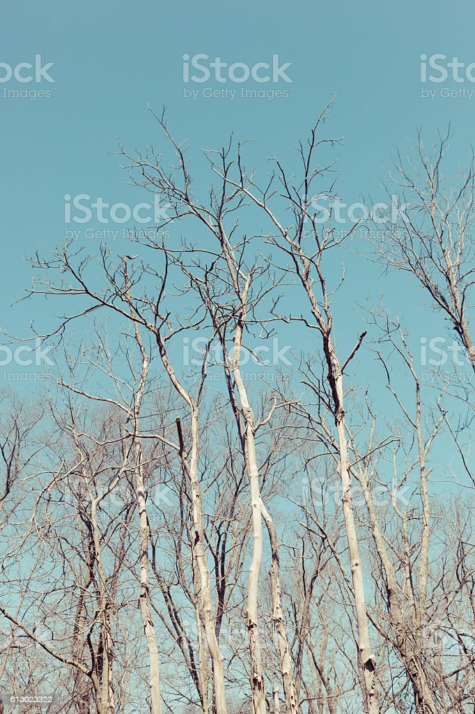 Trees on a Blue Sky stock photo