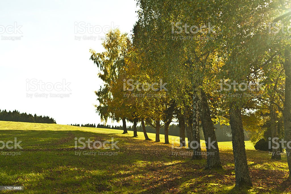 Trees on a field stock photo