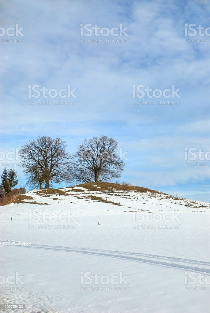 Trees on a hill - blue sky background stock photo