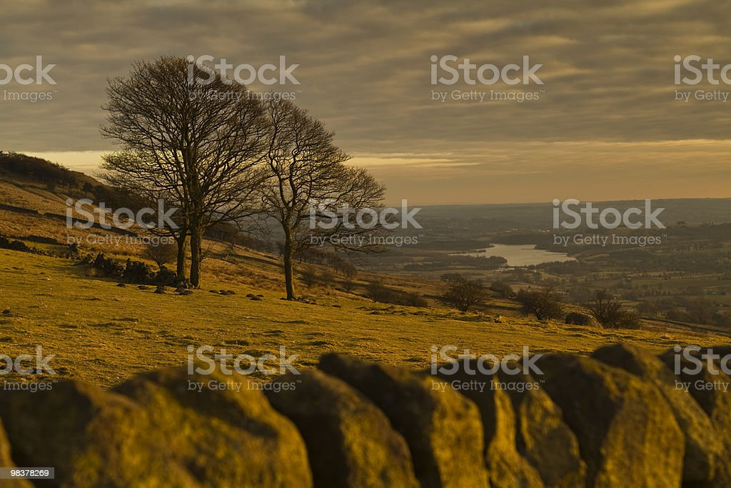 Trees on a hillside, at Sunset stock photo