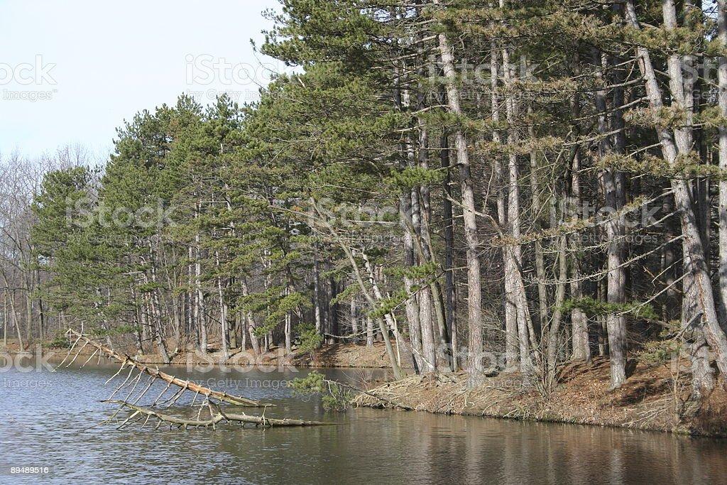 Trees on a lake stock photo