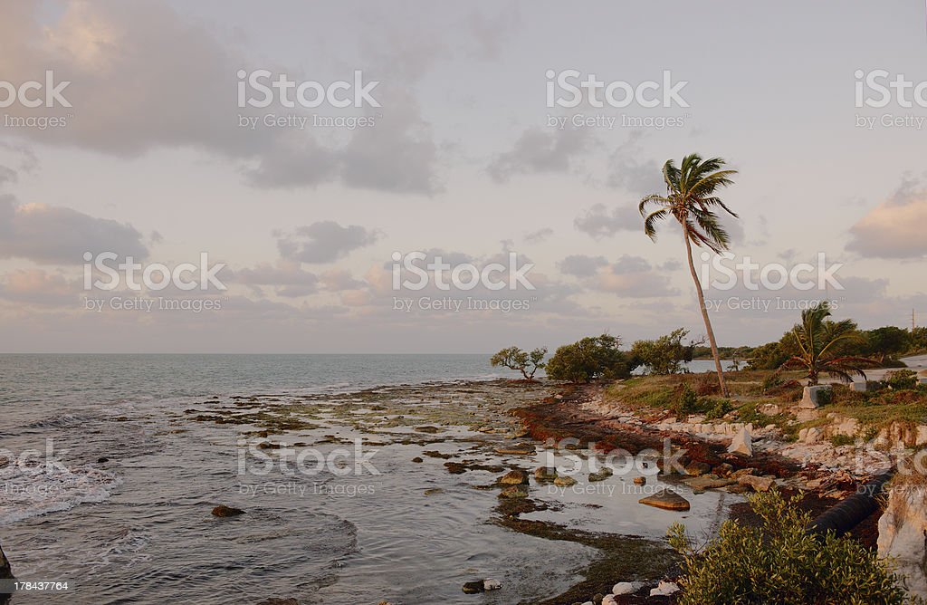 Trees on a reef beach. stock photo