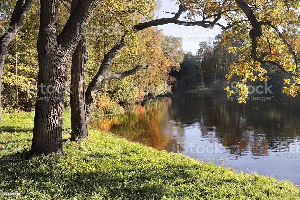 Trees on a riverbank starting to turn orange in late summer stock photo