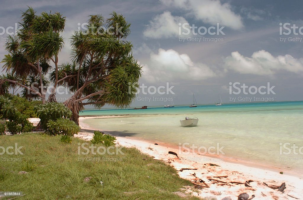 Trees on a tropical beach stock photo