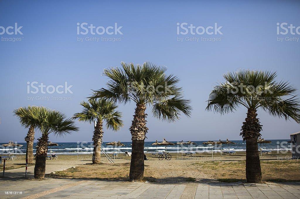 Trees on beach stock photo