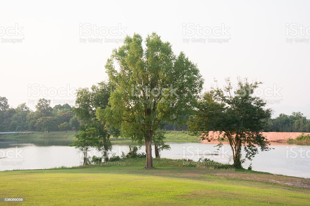trees on golf court stock photo