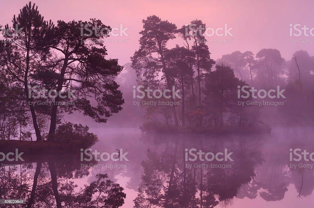 trees on lake surface at sunrise stock photo