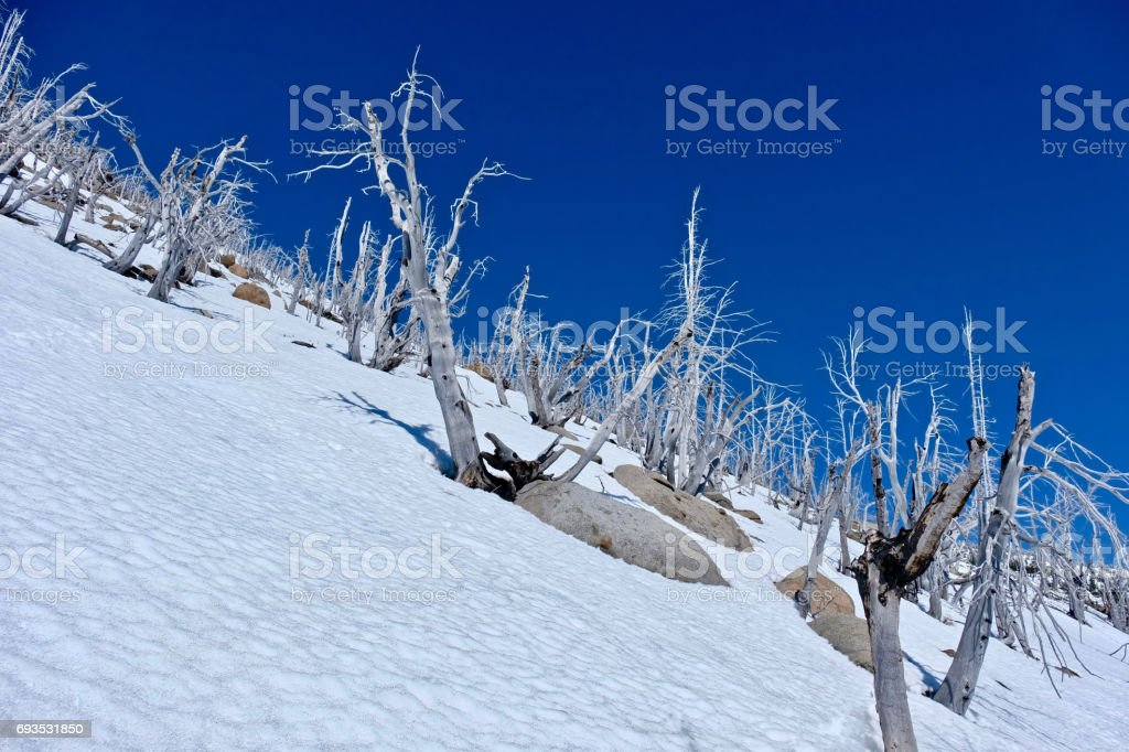 Trees on mountain top. stock photo