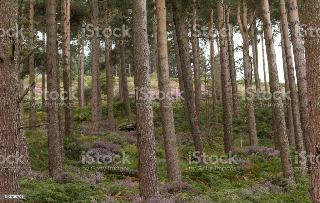 Trees on mountainside stock photo