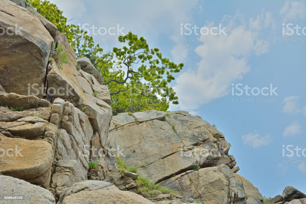 Trees on rocks stock photo