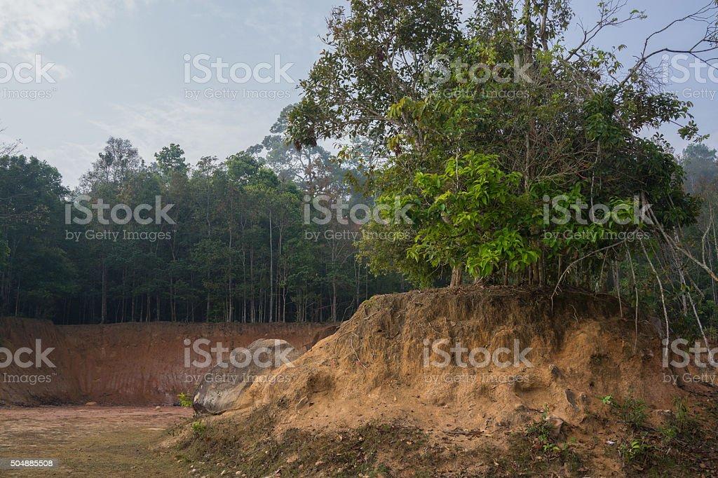 Arbres sur la petite colline avec de petites falaises et la forêt en arrière-plan photo libre de droits