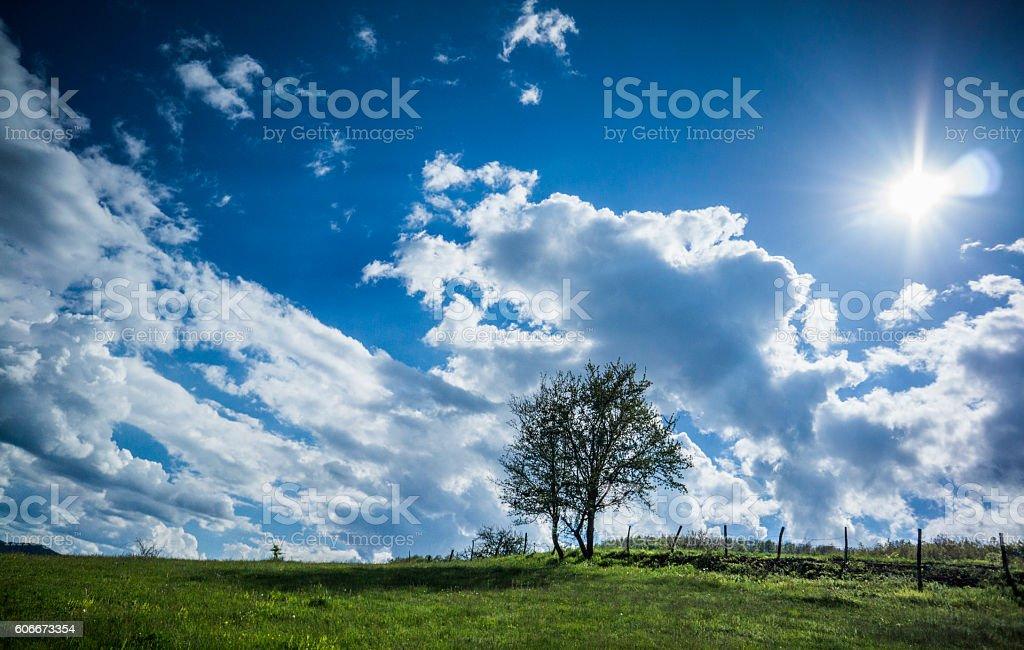 Trees on sunlight stock photo
