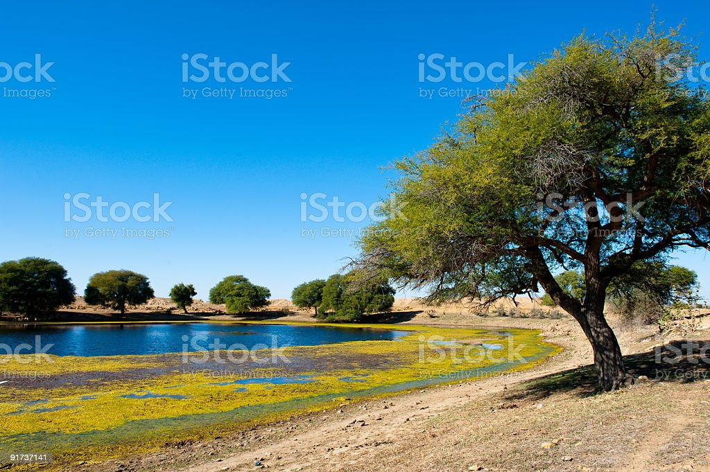 Trees on the bank of lake in desert stock photo