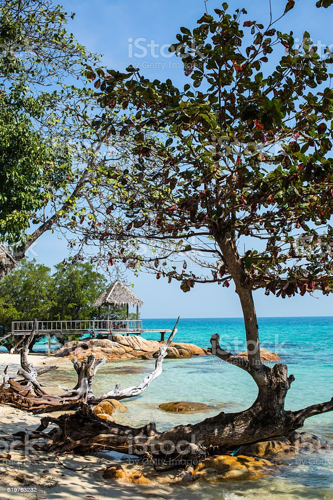 Trees on the beach, Gulf of Thailand stock photo