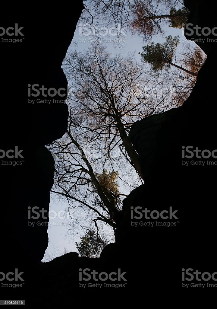 Trees on the edge of Teufelsschlucht canyon in Eifel region stock photo
