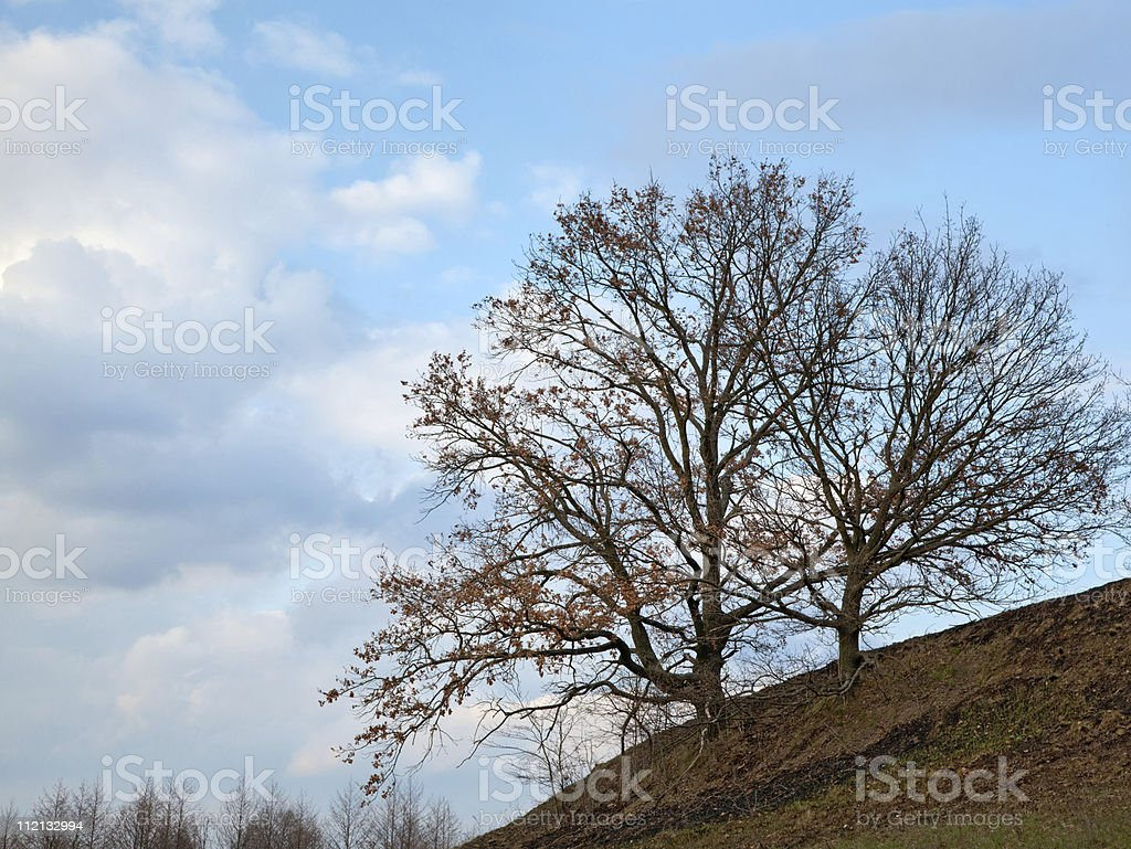 Trees on the hill and clouds stock photo