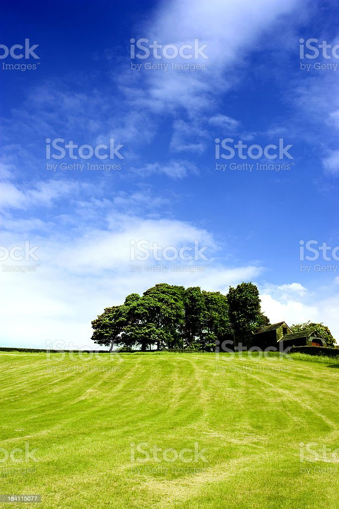 Trees on the hill royalty-free stock photo