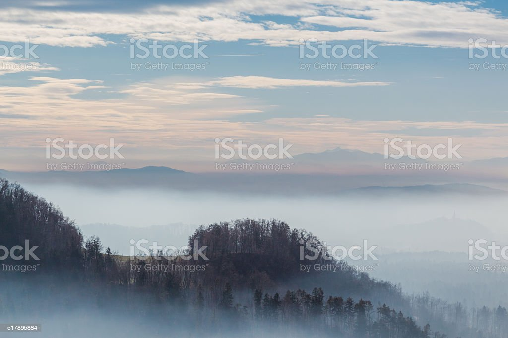 Trees on the hill. stock photo