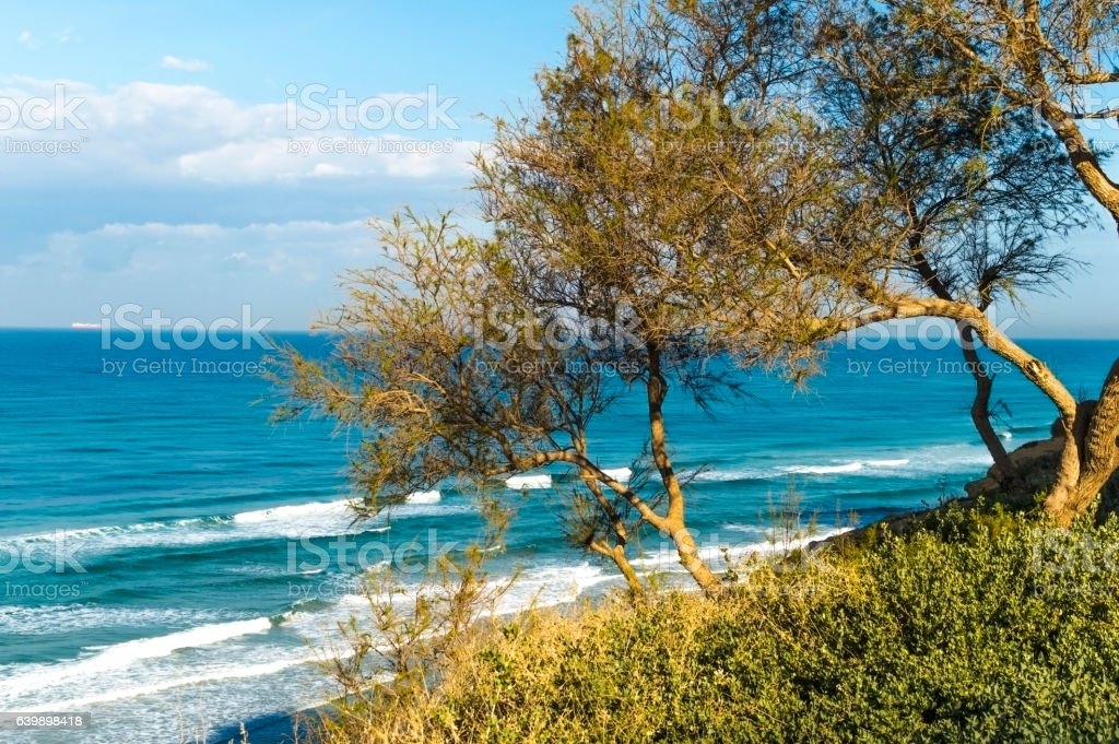 Trees on the hillside against the backdrop of sea stock photo