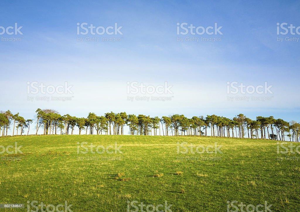 Trees on the horizon royalty-free stock photo